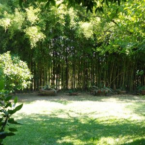 Bambu-Contrada-Guido-2